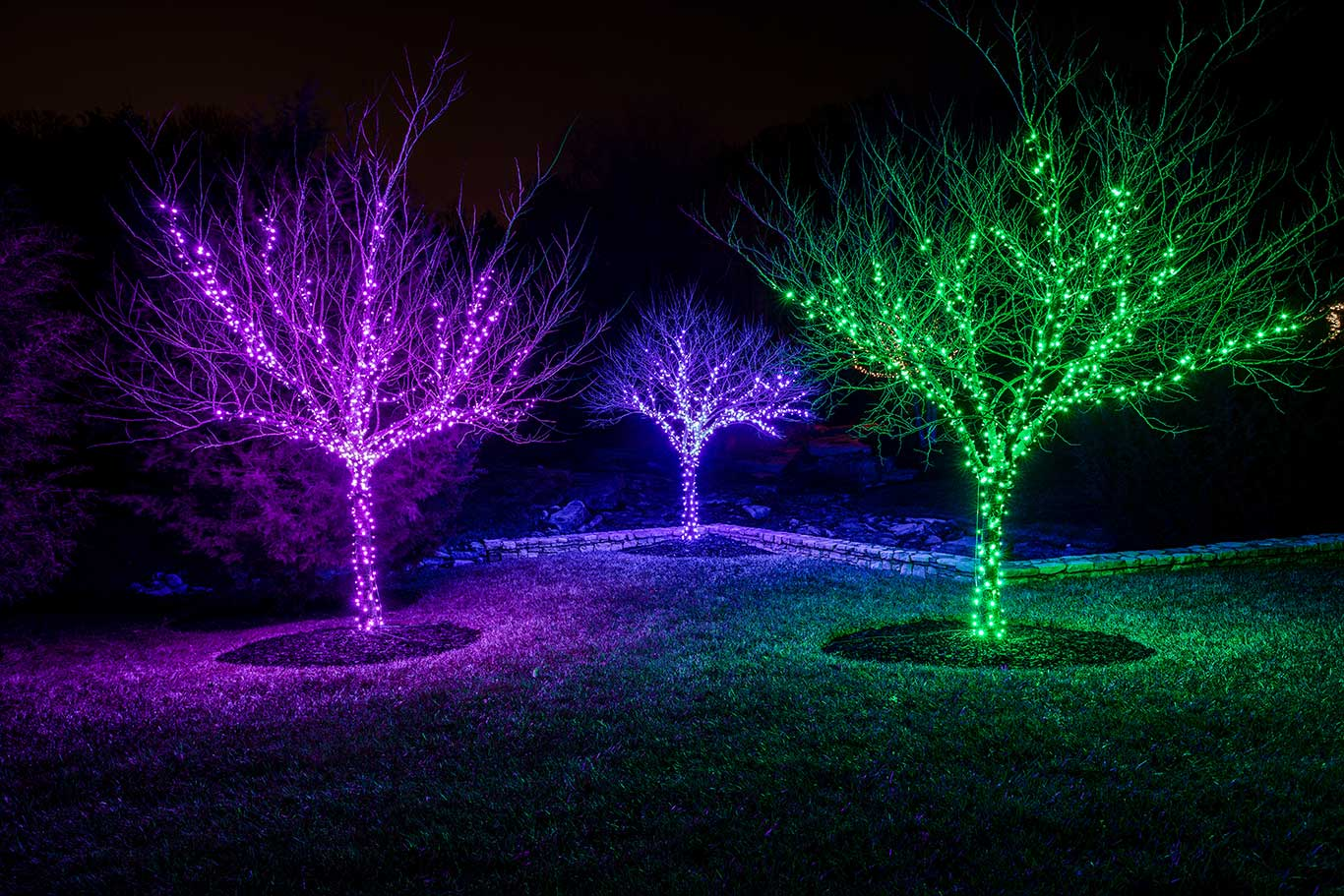 trees wrapped in colorful christmas lights