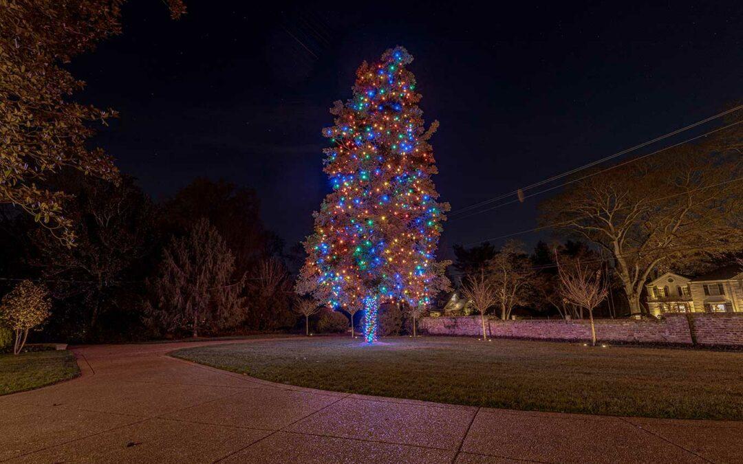 Mutli-Color Tree Wrap 2