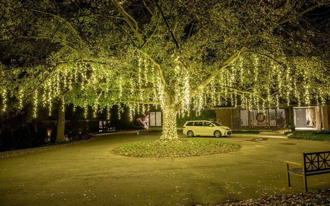 Spanish Moss Lights in Nashville Oak Tree